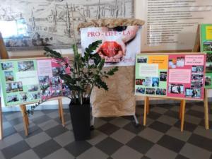 Festyn 2018 Wystawa 10