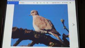 Żywa lekcja przyrody XI 2019 14