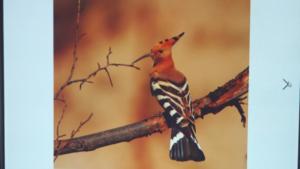 Żywa lekcja przyrody XI 2019 21